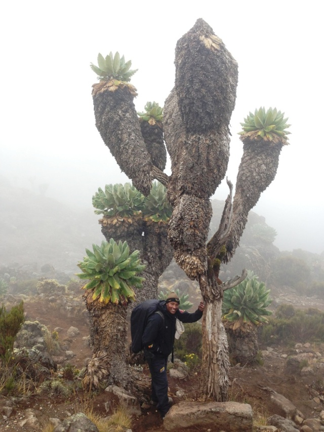 Urio with a Giant Senecio in the Barranco Valley.